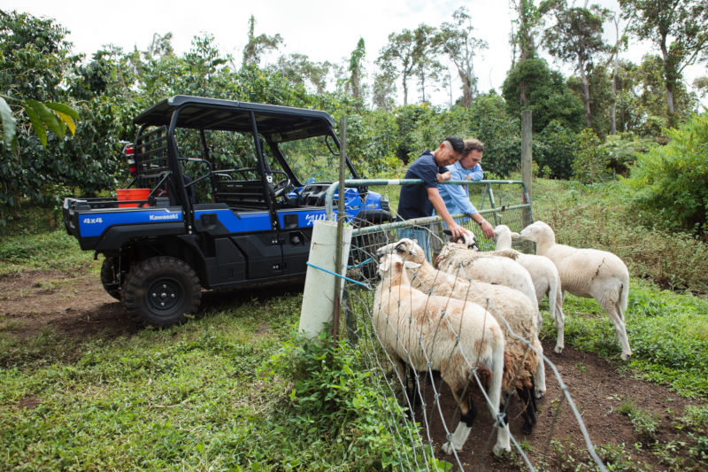 Private Tour Sheep